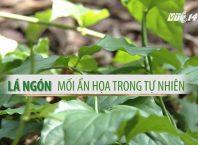Ngộ độc lá ngón, hạt mã tiền và khoai tây mộc mầm